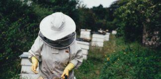 How to Start Honey Business