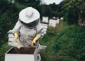 How to Start Honey Business